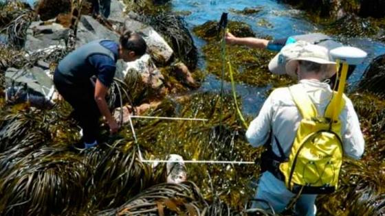 Chile: capacitan a pescadores artesanales para producir algas pardas destinadas a la biomedicina