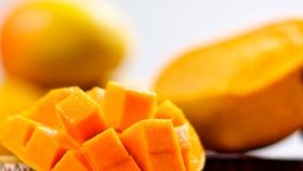 Volúmenes de mango de Ecuador bajarían en temporada 2020/21 por condiciones climáticas