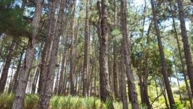 El Ministerio de Ambiente adjudicó contratos por casi 44 millones de pesos para el estudio de bosques y zonas forestales