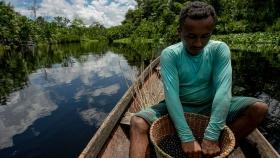 Açaí: la fruta de la Amazonía que causa furor todo el año