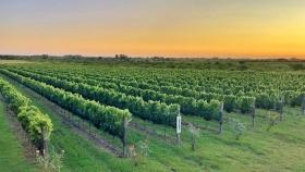 La Argentina vitivinícola, cada vez más diversa de punta a punta