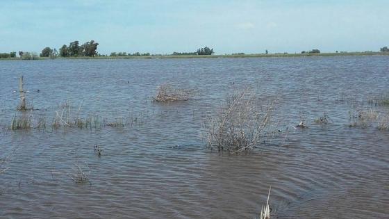 Lagunas de la provincia de Buenos Aires en alerta