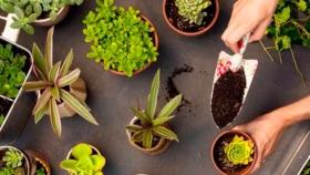 Trucos para un jardín o huerto nítido