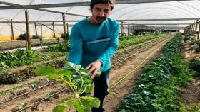 Pequeños productores: verduras orgánicas con alta demanda
