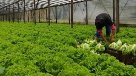 El Senasa dispuso la actualización automática de agricultores familiares