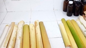Desarrollan alimentos con residuos del palmito