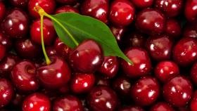 Chile: exportaciones de fruta aumentan 10% en volumen con alzas en cerezas y arándanos