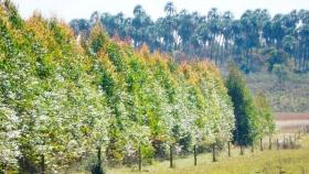 Marco legislativo forestal para productores de Entre Ríos