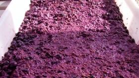 De desechos agrícolas a colorantes naturales