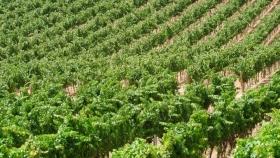 Almendro: cómo realizar una producción sustentable y qué factores influyen en la nutrición