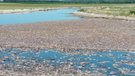 Agrotóxicos: ¿La causa de la impactante mortandad de peces en la Laguna de Gómez?
