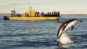 Yellow Submarine, la estrella de Península Valdés