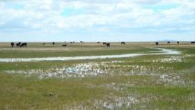 De la mano del Concurso de Agua se restaurará un humedal mendocino clave para la biodiversidad y la producción ganadera local