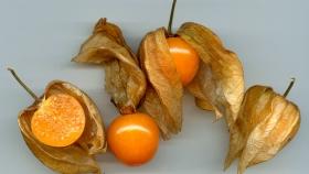 Uchuva, la fruta que permitiría diversificar la frutihorticultura en Tucumán