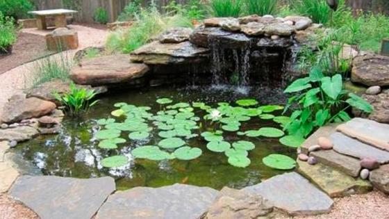 Consejos para un buen mantenimiento de tu estanque
