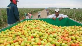 México garantiza frutas y verduras sanas