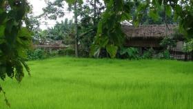 La investigación india puede ayudar a reducir el desperdicio de fertilizantes nitrogenados