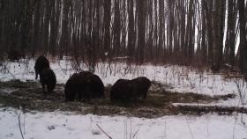 """Profesor de Saskatoon crea una aplicación para rastrear cerdos salvajes """"completamente fuera de control"""""""