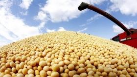 ¿Cuáles fueron los últimos movimientos del mercado de granos?