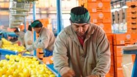 Se aplicarán nuevos tratamientos para poder exportar limones a la Unión Europea