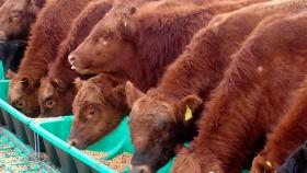 Comederos y bebederos Feed Plast
