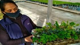 Empresas sanjuaninas promueven horticultura familiar orgánica