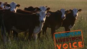 """El sector ganadero europeo responde los """"influencers"""" acerca de la transición a la carne sintética"""