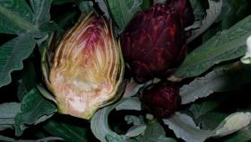 Argentina: La flor más rica del invierno