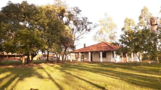 Cámara Argentina de Inmobiliarias Rurales: 'La demanda para alquilar campos está muy sostenida'
