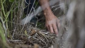 """""""No aplicar herbicidas más de una vez en el lote de soja"""", la receta rentable y con resultados positivos de un asesor"""