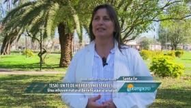 Tesaí: un té de hierbas ancestrales