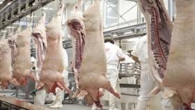 Exportaciones porcinas: el sector exige cambios en el régimen impositivo