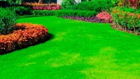 Césped, esa alfombra verde natural