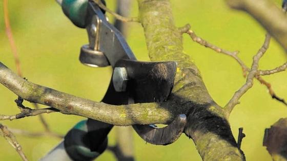 Poda de árboles frutales: cuándo, cómo y para qué