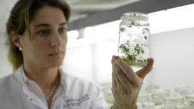 Debaten normativas para nuevos organismos vegetales modificados