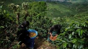 Destacan el potencial de la bioeconomía en sistemas alimentarios de América