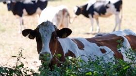 Una tesis concluye que el silvipastoreo frena los efectos del cambio climático