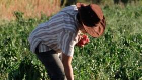 Buenos Aires incorpora 140 facilitadores para promover la agroecología