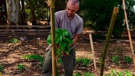 Permacultura: un sistema para la Evolución