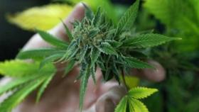¿Comida con cannabis? Así Rosita emprendió negocio en Xalapa
