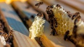 Jardines polinizadores, espacios donde facilitar alimento a las abejas