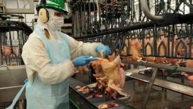 El USDA estima una subida del 1,5% en la producción avícola de la UE