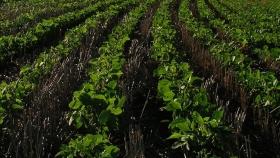 Una solución sustentable para el control de las malas hierbas