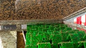 Producción de moscas: el negocio por dentro