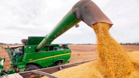 Reajustan los protocolos para la recepción de granos