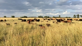 La Julia Organics: carne orgánica y certificada 100% argentina
