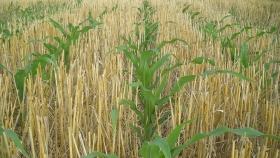 Con altos niveles de siembra directa, en Argentina evolucionan cinco prácticas sustentables clave para los sistemas