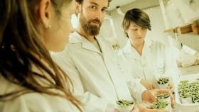 Los argentinos que descubrieron un gen que acelera el crecimiento de las plantas