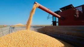 Exportaciones de cereales: enfoque en la calidad, impulso de infraestructura