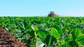 Los productores deben cosechar 1.870 kg/ha para cubrir los costos en soja de primera en Entre Ríos